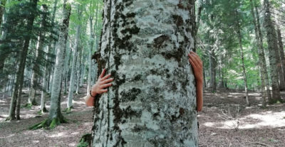 Alternative uses of Forests for Health and Wellbeing
