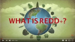 WHAT IS REDD+