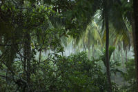 Thai_rain_forest_redd_communication