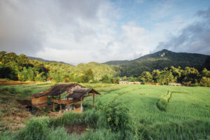 hut in rice field in Thailand
